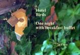 1_Hotel Bird_1