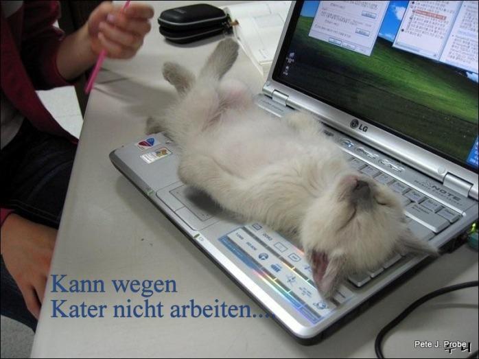 001_wegen-kater-nicht-aebwitn