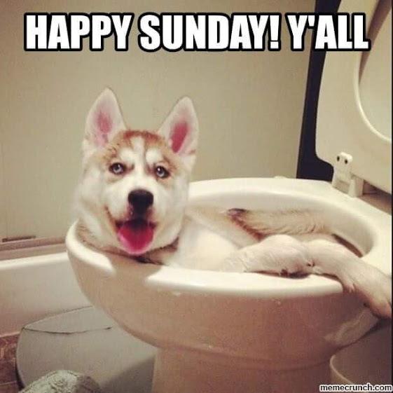 003_Happy Sunday