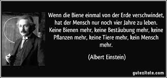 0063_Einsteinbienensterben