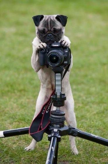 012_Hundfotograf