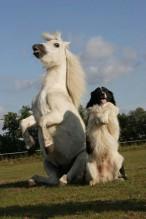 Hund mit Pferd