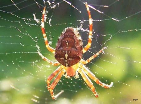 04-55-spider_2b