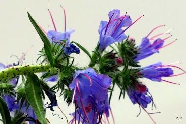 18-001_flower