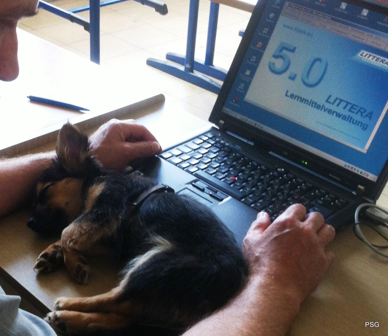 001_Hundemüde2_(PJP)