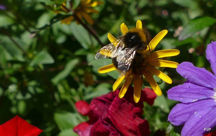 Insekten_1 - Bienen