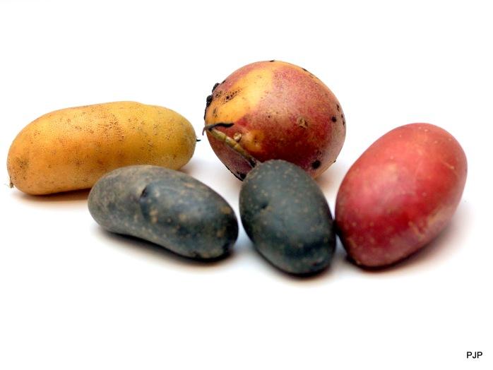 001_Kartoffel_3