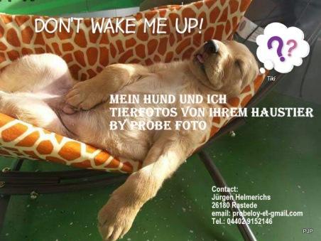 Hundefoto_werbung