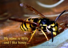 001_Wespe_Willy