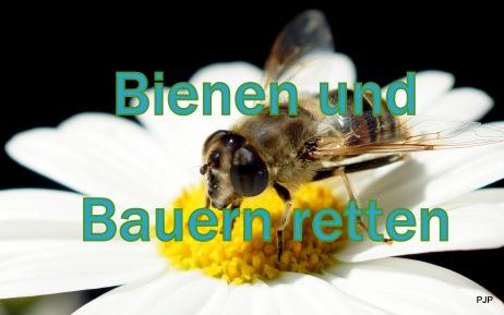 7-001_bienentitel